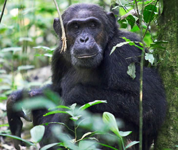 Primate tracking safaris